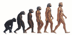 Graphic for the evolution of man